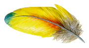 Feather7
